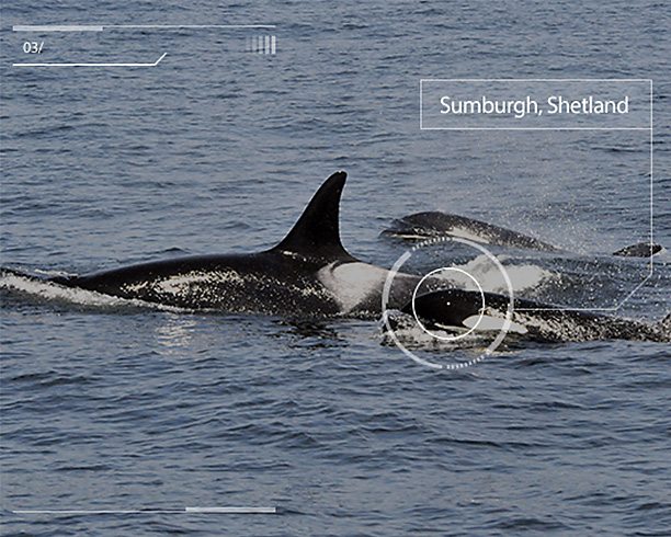 image_in_article_shetland